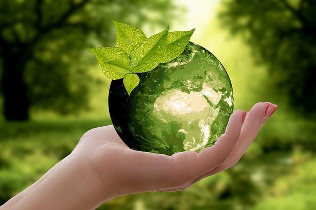 יד מחזיקה בפרי שקוף עם רקע ירוק